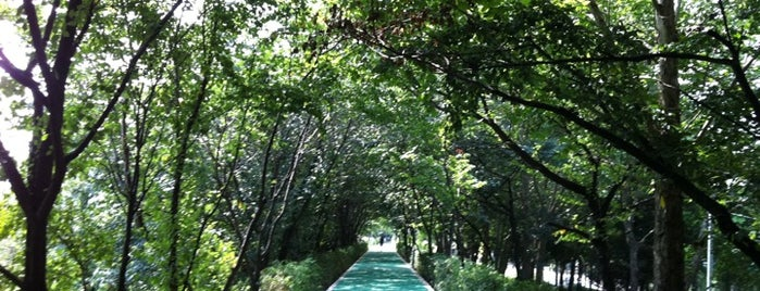 Yangjaechun Trails is one of Seoul.