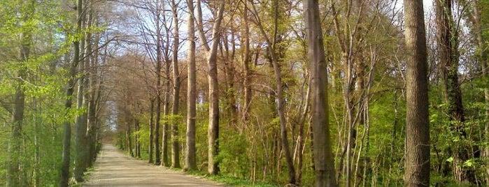 Bois Regional de Dieleghem is one of  Do.