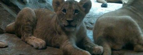 Milwaukee County Zoo is one of Milwaukee's Best Spots!.