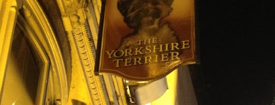 The Yorkshire Terrier is one of york.