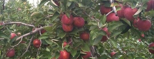 Lynds Fruit Farm is one of Vincent: сохраненные места.