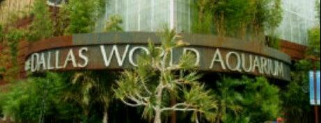Dallas World Aquarium is one of Zoos of Texas.