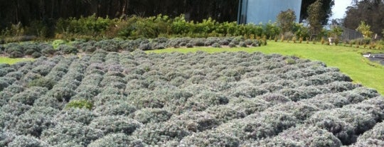 Ali'i Kula Lavender is one of Hawaii.