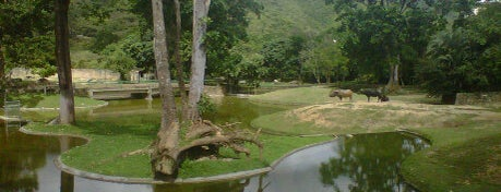 Parque Zoológico Caricuao is one of Explorando en: Caracas, Venezuela #4sqCities.