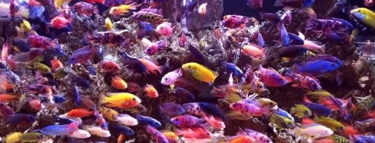 Fish Shop/Farm/Aquarium
