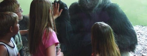 The Oklahoma City Zoo is one of To Visit in OKC.