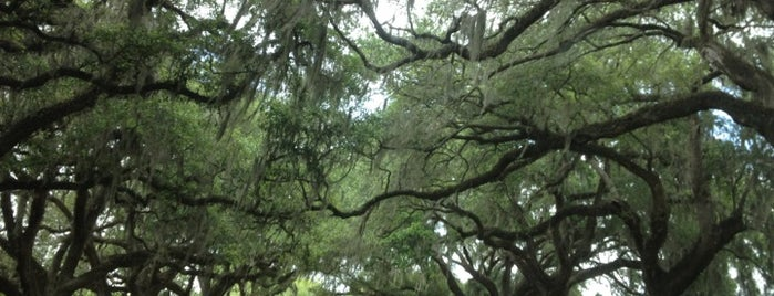 Boone Hall Plantation is one of Charleston.
