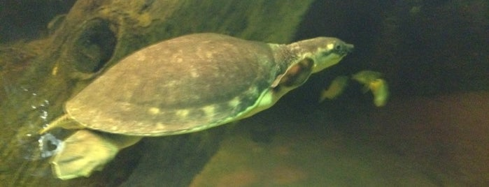 Fresno Chaffee Zoo is one of Zoos/Aquariums in CA.