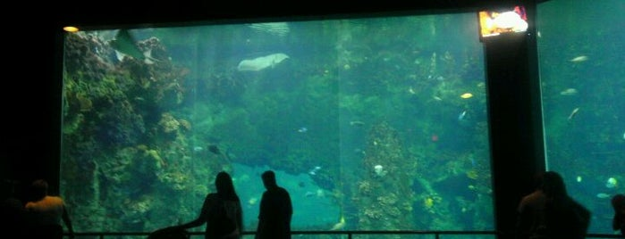 Sharks/The Coral Reef is one of Marissa 님이 좋아한 장소.