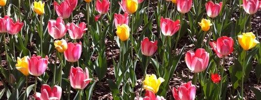Atlanta Botanical Garden is one of My midtown Atlanta.