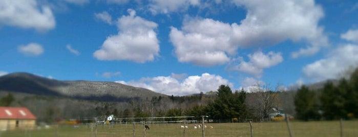 Woodstock Farm Animal Sanctuary is one of Woodstock trip.