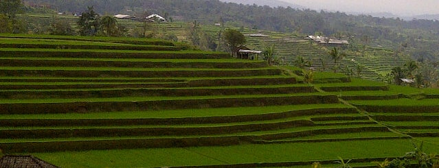 Jatiluwih Rice Terraces is one of Bali for The World #4sqCities.