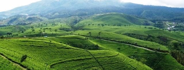 Kebun Teh Kemuning is one of Java / Indonesien.