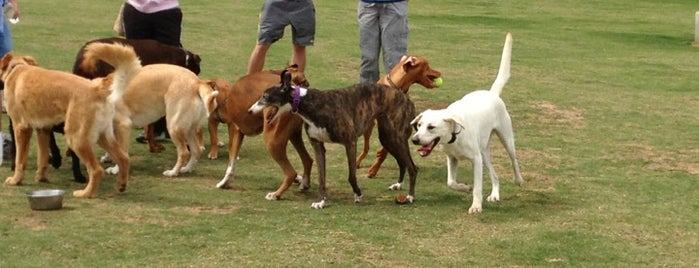 Lewisville Dog Park is one of Lugares favoritos de Zarahi.