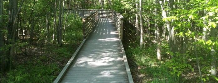The Great Swamp Wildlife Reserve is one of New Jersey with kids.