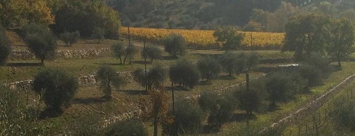 Osteria Fonterutoli is one of Tuscany.