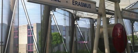 Erasmus (MIVB | De Lijn) is one of fiumane.
