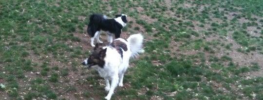 Haverford Reserve Dog Park is one of ✨ Larry: сохраненные места.