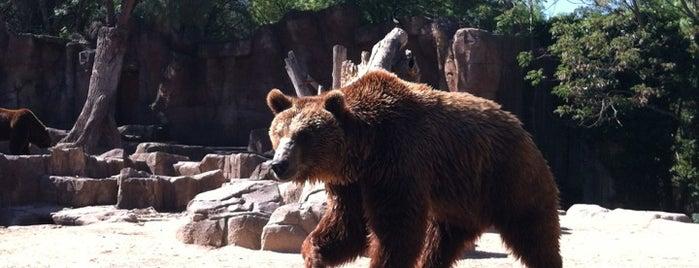 Zoo Aquarium de Madrid is one of The Best Of Madrid.