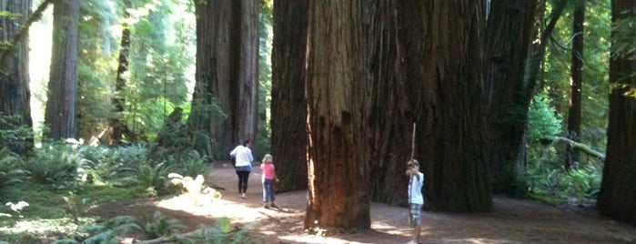 Redwood National Park is one of Roadtrip.