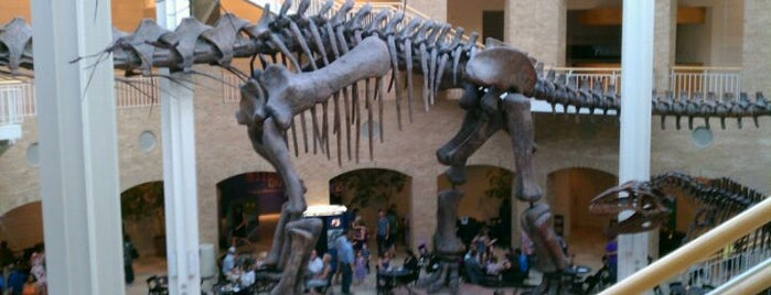 Fernbank Museum of Natural History is one of The Atlanta I Know and Love, By an Atlanta Native.