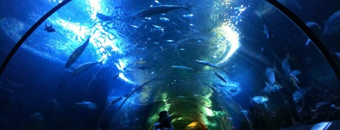 Underwater World And Dolphin Lagoon is one of Guide to Singapore's best spots.