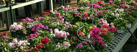 Calloway's Nursery is one of John's Liked Places.