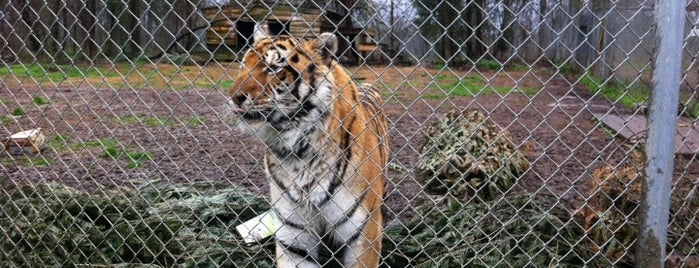 Carolina Tiger Rescue is one of Top Spots in North Carolina.