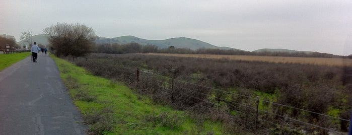 Coyote Hills Regional Park is one of Running Spots in the Bay Area.