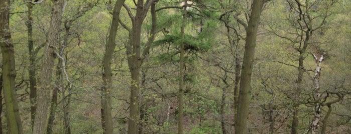 Shipley Glen is one of Dog Walking Spots in Yorkshire.