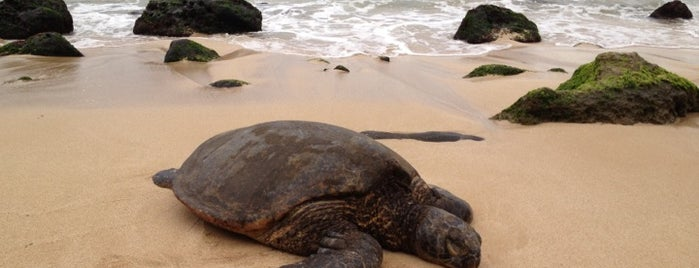 Laniakea (Turtle) Beach is one of Oahu: The Gathering Place.
