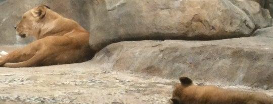 Milwaukee County Zoo is one of Discover Milwaukee.