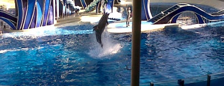 Dolphin Theater is one of My vacation @Orlando.