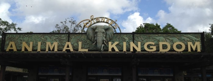 Disney's Animal Kingdom is one of My favorites for Theme Parks and Rides.