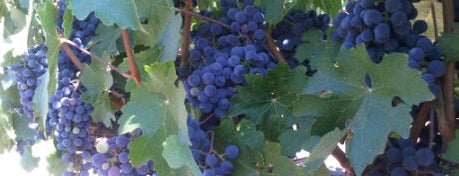 Foley Johnson Winery is one of NVFF | Wine Partners.