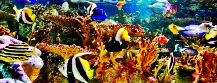 New England Aquarium is one of Posti che sono piaciuti a Carl.