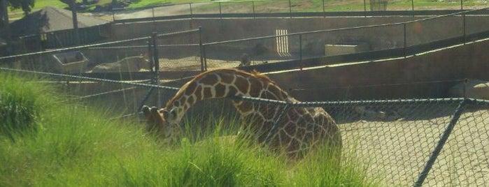 San Diego Zoo Safari Park is one of SAN.