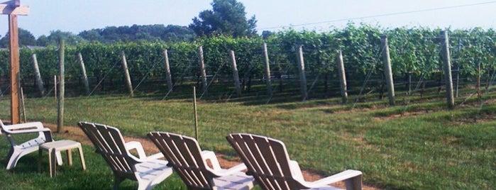Va La Vineyards is one of Outdoor To-Dos in Southeastern PA, NJ & DE..