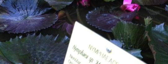 "Jardín Botánico ""Francisco Javier Clavijero"" is one of Mis favoritos de Xalapa."
