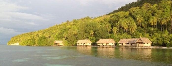 Kri Eco Resort (Papua Diving) is one of Raja Ampat.