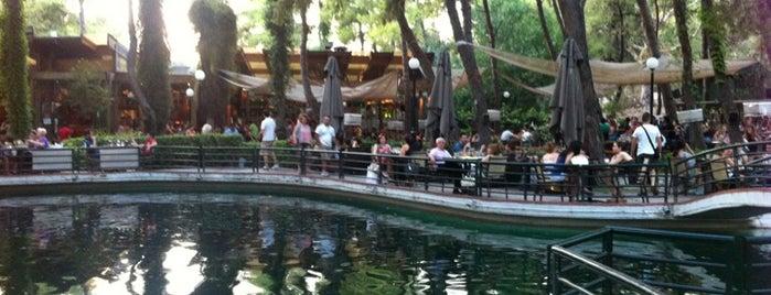 Piu Verde is one of Top 10 nightlife places.