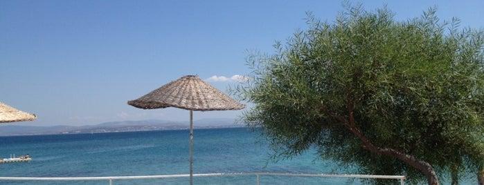 Lodos Plajı is one of Çeşme Sakız.