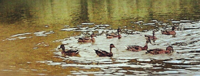 Лісове озеро is one of Oksana : понравившиеся места.
