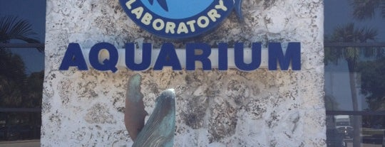 Mote Marine Laboratory & Aquarium is one of My Fun.