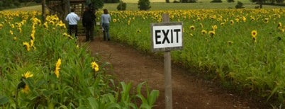 Wistow  Maze is one of Crazy Places.