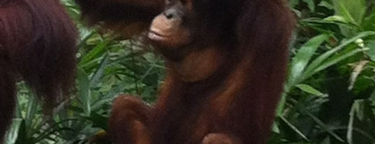 Singapore Zoo is one of Singapore.