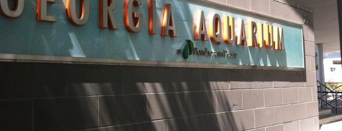 Georgia Aquarium is one of Favorite affordable date spots.