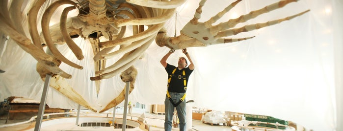 North Carolina Museum of Natural Sciences is one of Science, Art & History.