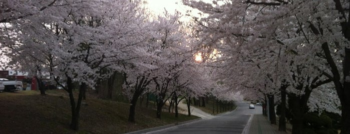KAIST (한국과학기술원) is one of My Korea-Japan Trip'13.