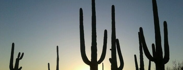 Saguaro National Park is one of TODO Tucson.